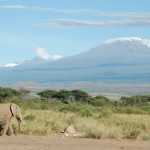 """Elephant and Kilimanjaro"" by Charles Asik from Dar es Salaam, Tanzania. Licensed under CC BY 2.0 via Wikimedia Commons"